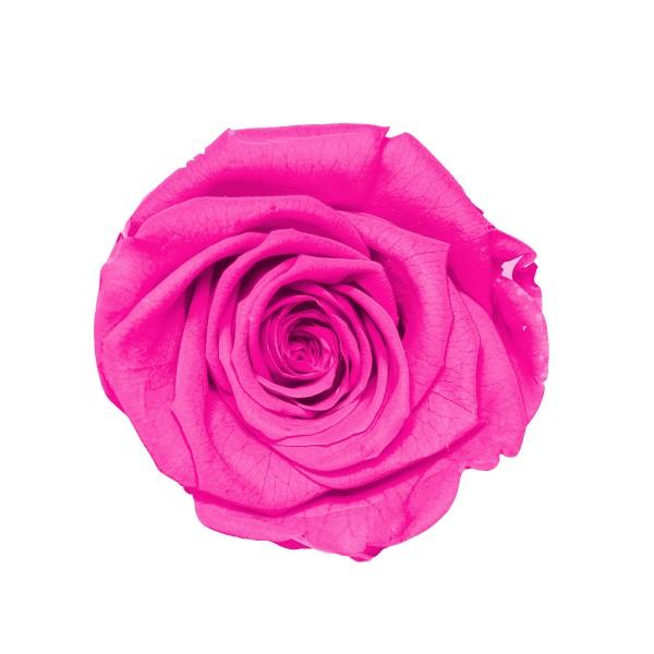 Rose hot pink (pink)