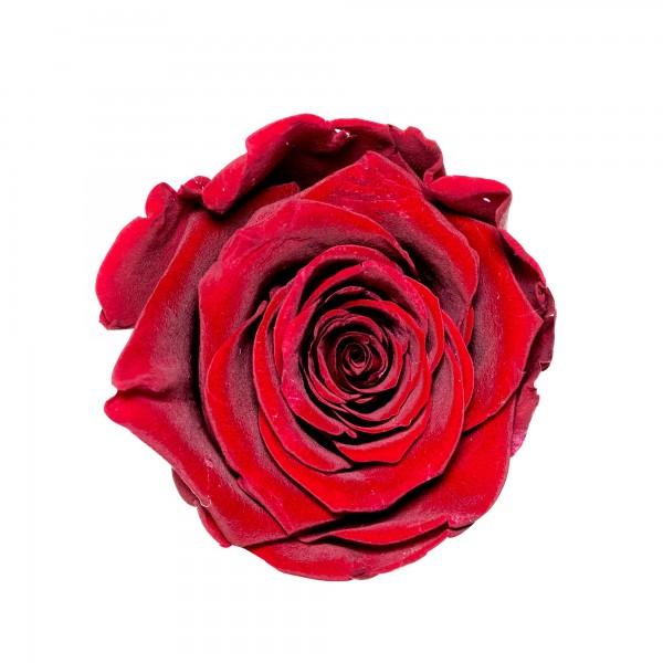 Rose royal red (dunkelrot)