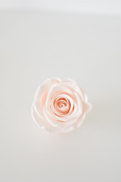 Rose pink blush (hellrosa)