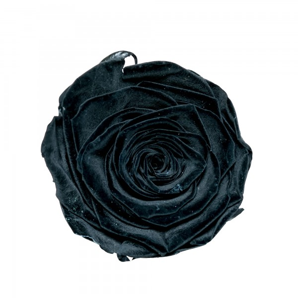 Rose black beauty (schwarz)